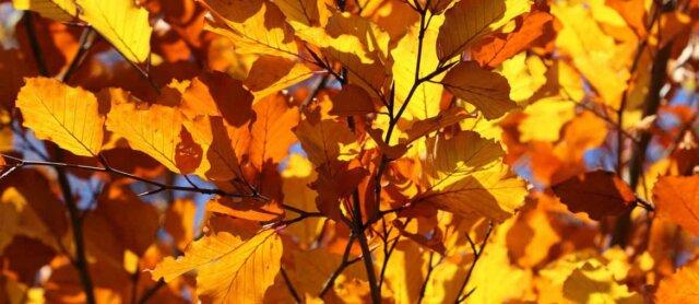 Autumn in Geelong